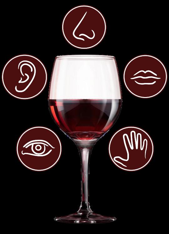 Awaken your Senses with glass